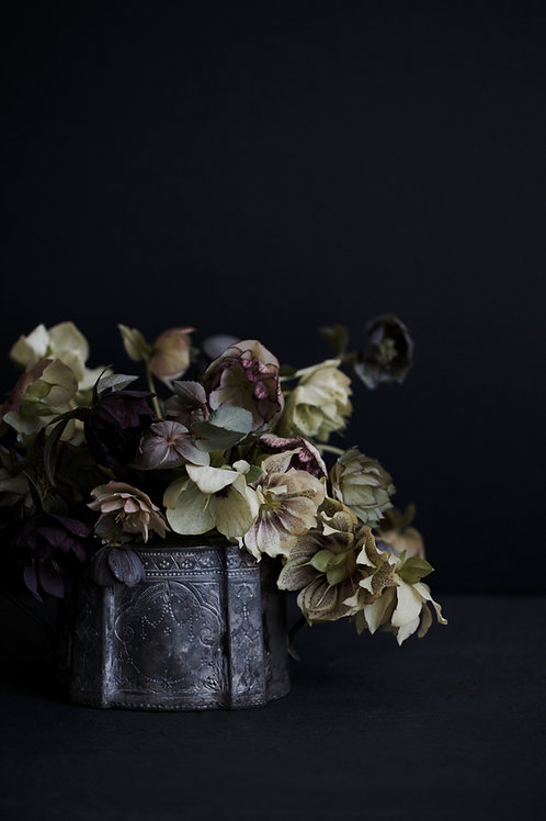 Photographic Print {vintage hellebores (i)}