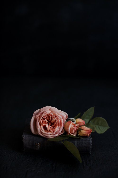 Greeting Card - Rosa and The Word [A60018]