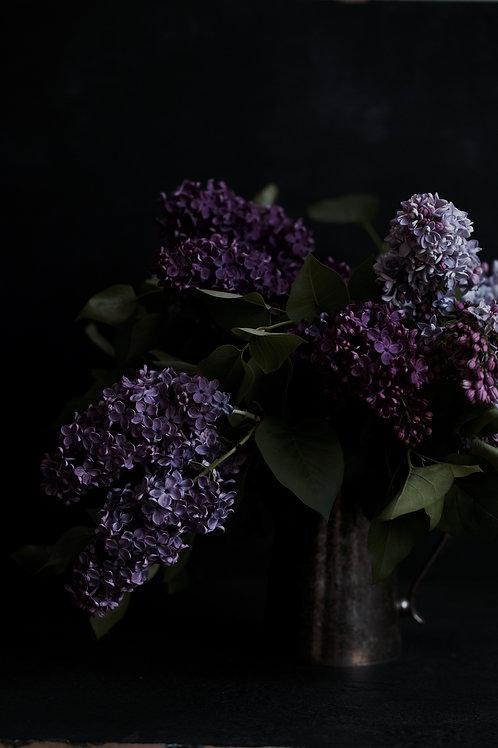 Photographic Print {chasing lilacs (iv)}