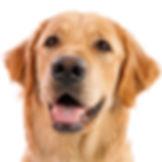 dog-png-22669.jpg