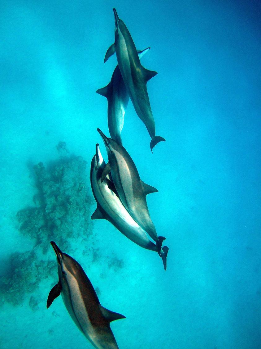 kingston Odeaan de dolfijnen 182.jpg
