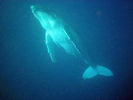 bij walvissen (2).jpg
