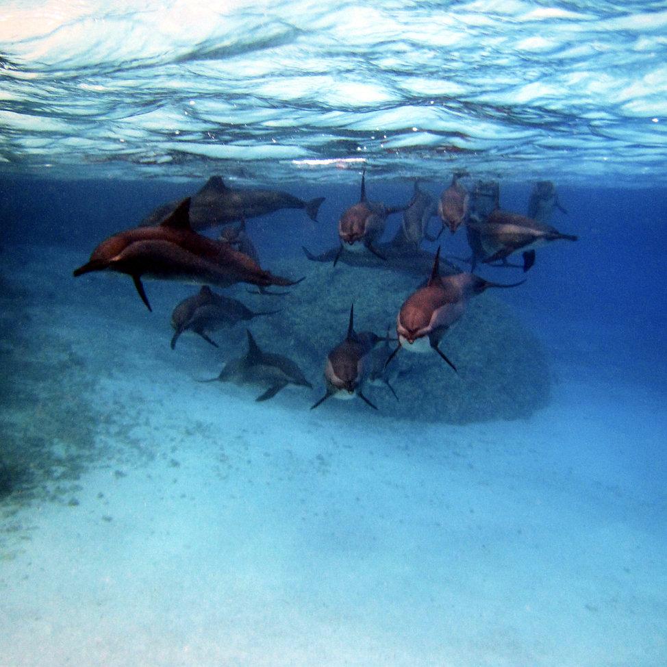 dolfijnen boodschappers van liefde.jpg