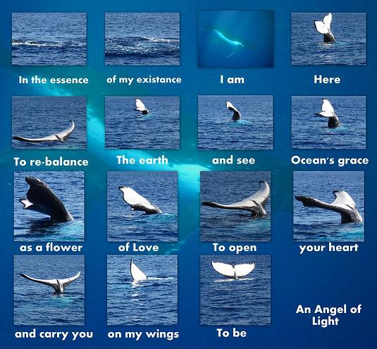 Boodschap Walvissen2.jpg