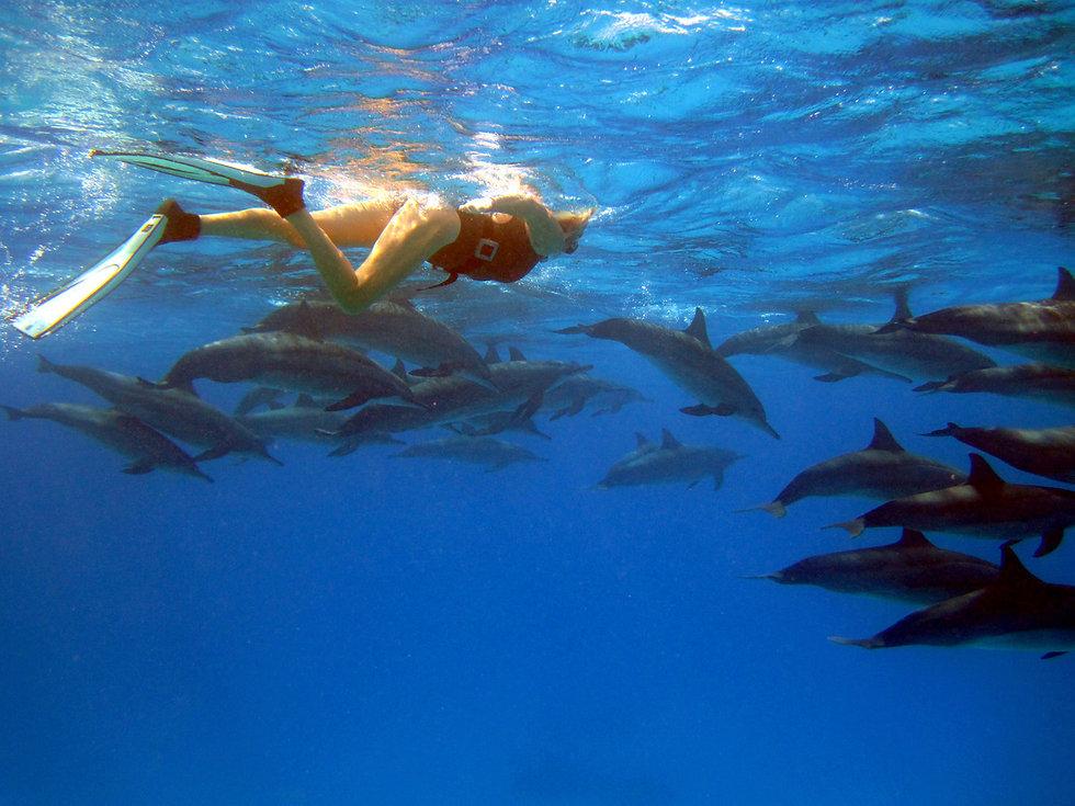zwemmen metJPGdolfijnen sataya rif egypte