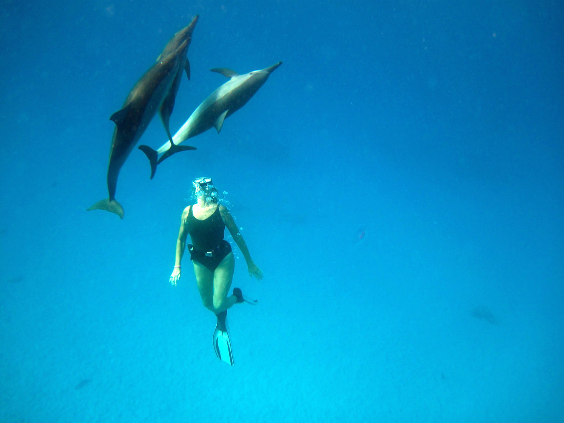 dolfijnen reizen met ocean.jpg