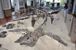 Museo Paleontologico, Villa de Leyva (1a