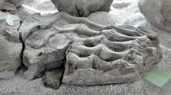 Museo El Fosil, Villa de Leyva (16)-001