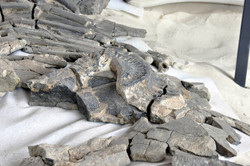 Museo Paleontologico, Villa de Leyva (38