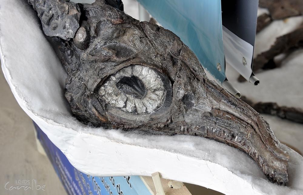 Museo Paleontologico, Villa de Leyva (12