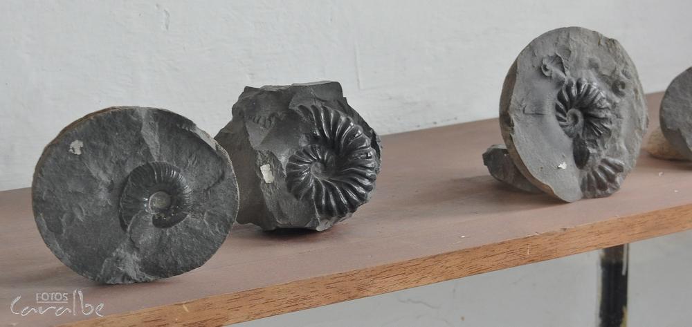Museo El Fosil, Villa de Leyva (28)-001