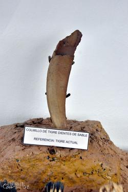 Museo Paleontologico, Villa de Leyva (26