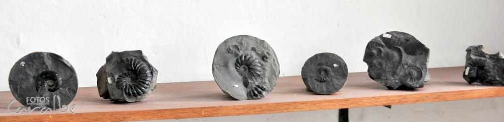 Museo El Fosil, Villa de Leyva (30)-001