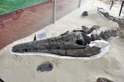 Museo Paleontologico, Villa de Leyva (28