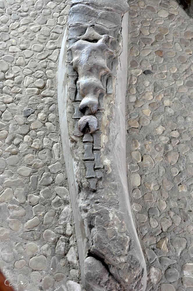 Museo El Fosil, Villa de Leyva (6)-001 (