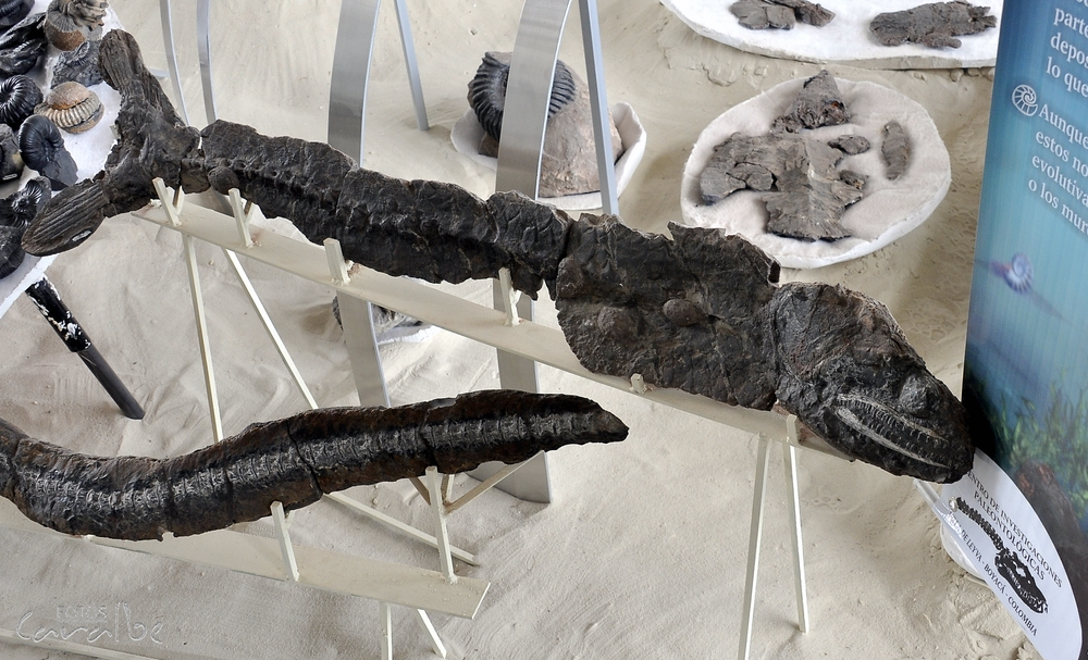 Museo Paleontologico, Villa de Leyva (20