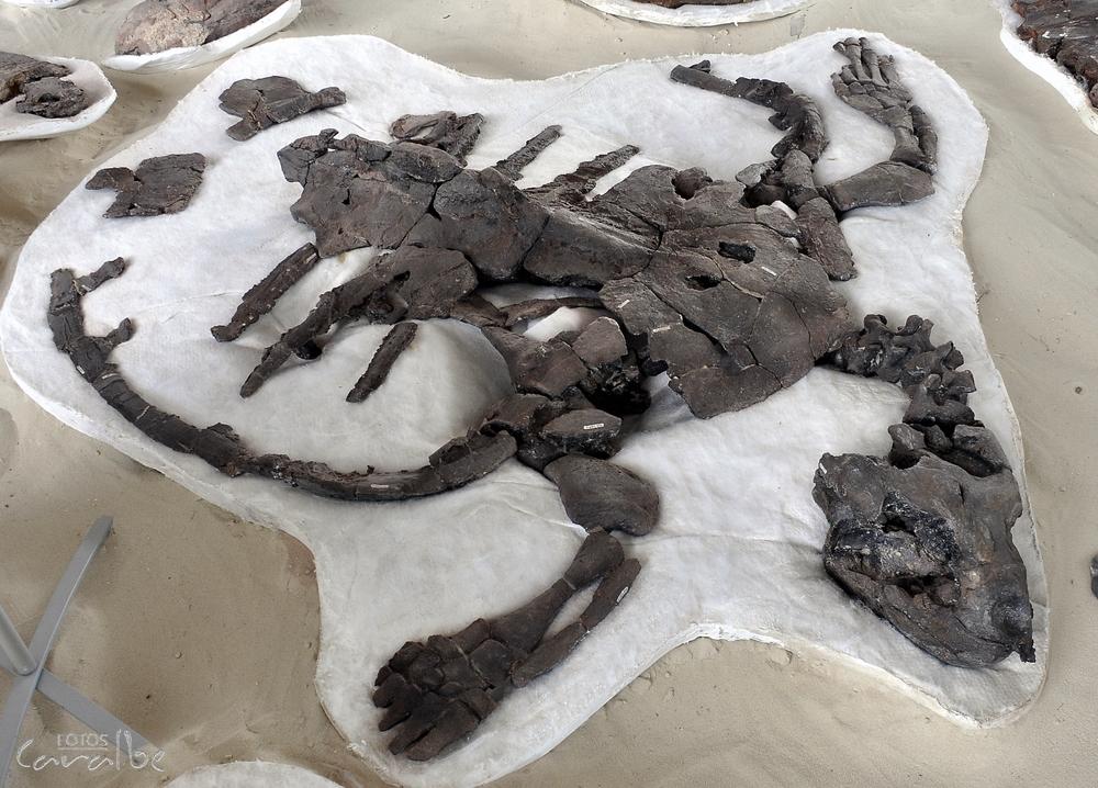 Museo Paleontologico, Villa de Leyva (9)