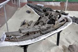 Museo Paleontologico, Villa de Leyva (2)