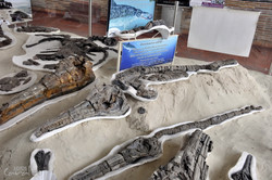 Museo Paleontologico, Villa de Leyva (16