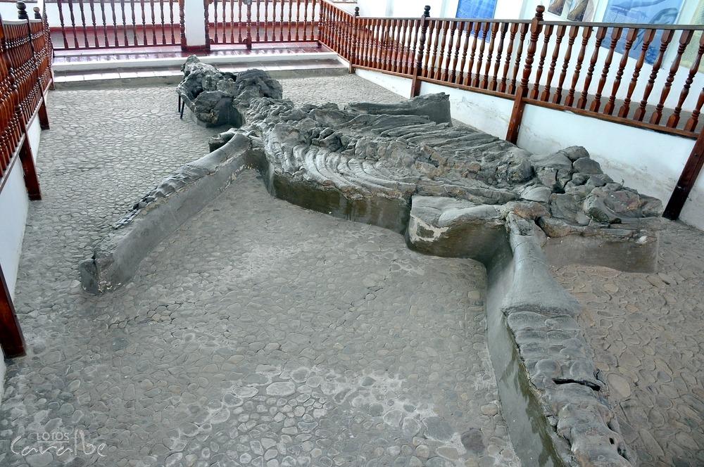 Museo El Fosil, Villa de Leyva (5)-001 (