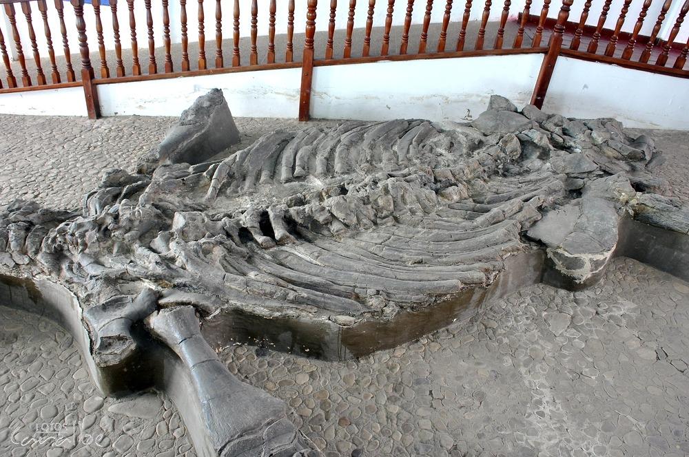 Museo El Fosil, Villa de Leyva (8)-001 (