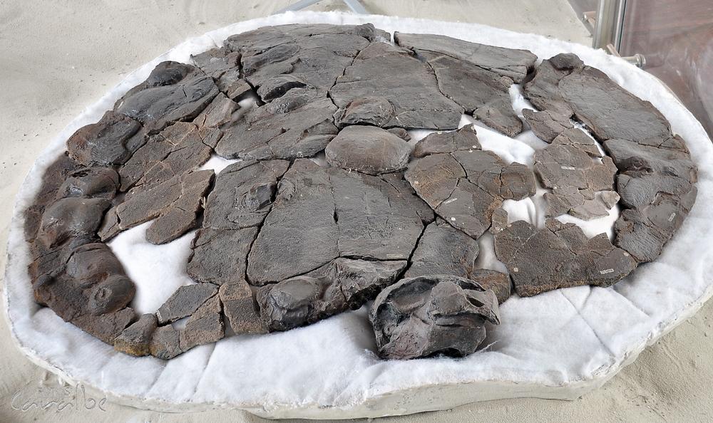 Museo Paleontologico, Villa de Leyva (6)