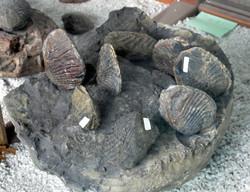 Museo El Fosil, Villa de Leyva (18)-001