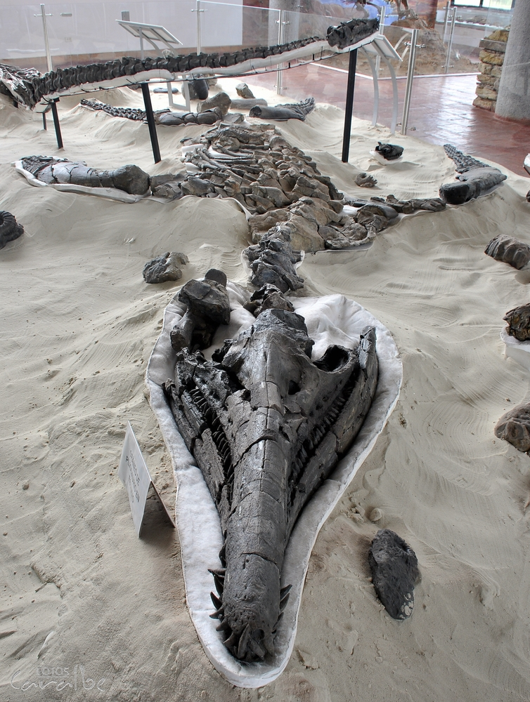 Museo Paleontologico, Villa de Leyva (3)