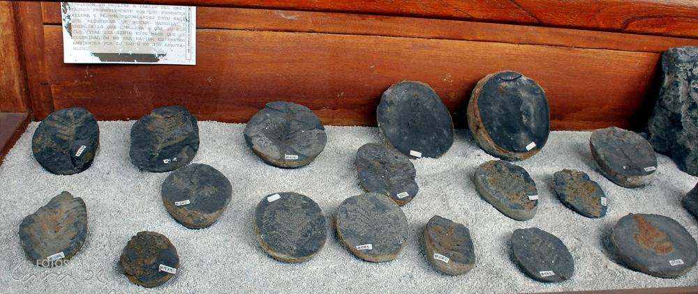 Museo El Fosil, Villa de Leyva (20)-001