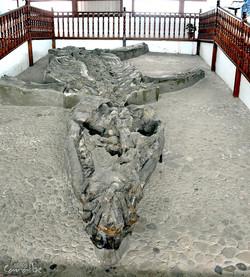 Museo El Fosil, Villa de Leyva (2)-001 (