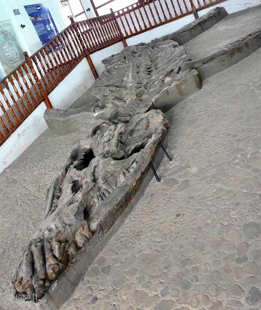 Museo El Fosil, Villa de Leyva (4)-001 (
