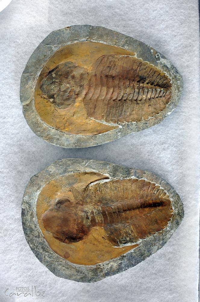 Museo Paleontologico, Villa de Leyva (29
