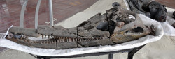 Museo Paleontologico, Villa de Leyva (5)