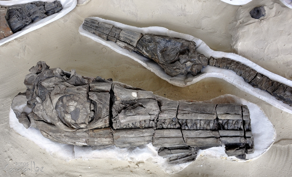 Museo Paleontologico, Villa de Leyva (13