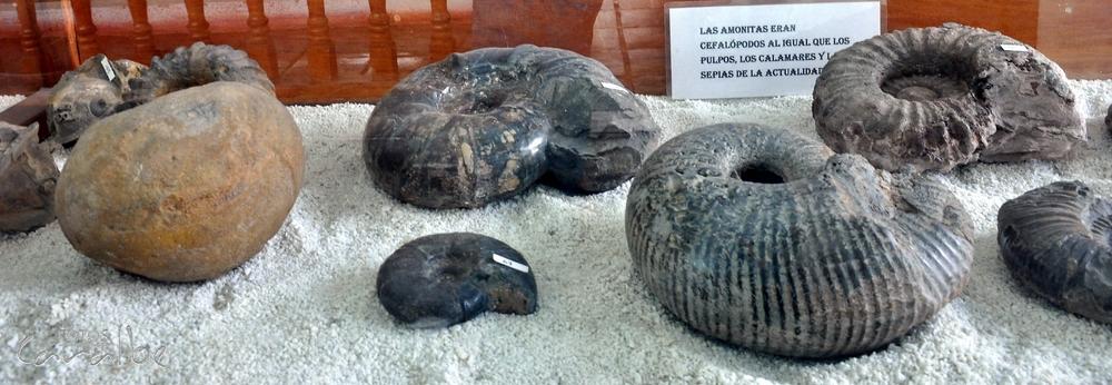 Museo El Fosil, Villa de Leyva (11)-001