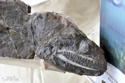 Museo Paleontologico, Villa de Leyva (19