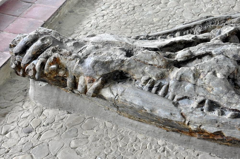 Museo El Fosil, Villa de Leyva (9)-001 (
