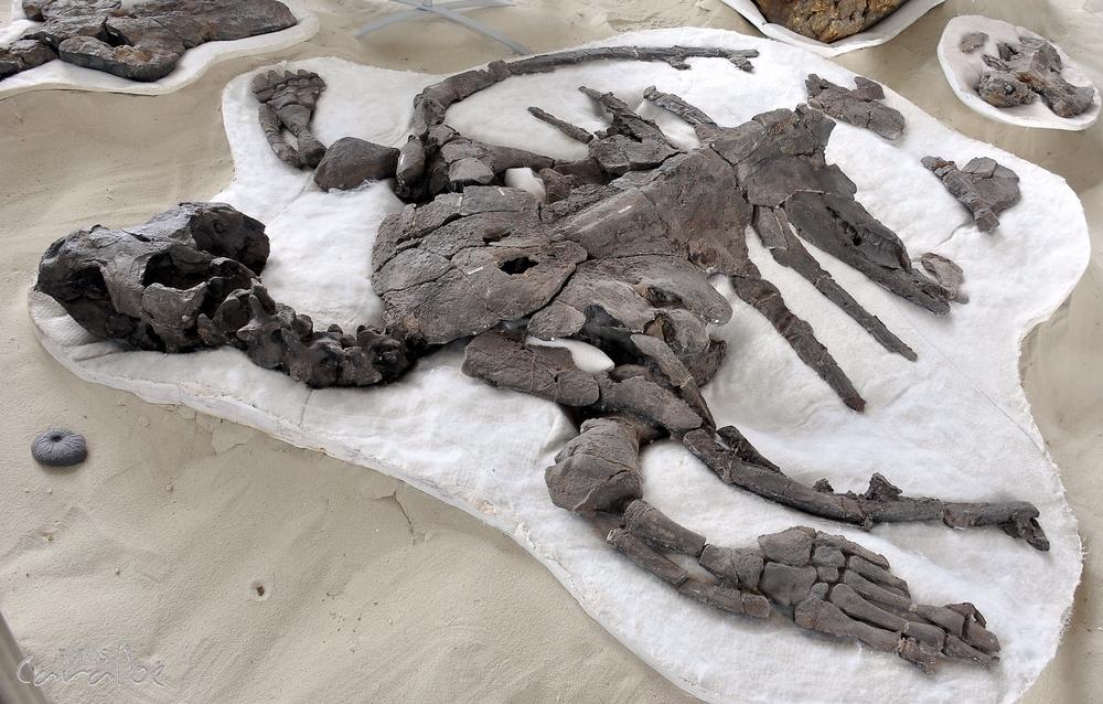 Museo Paleontologico, Villa de Leyva (8)