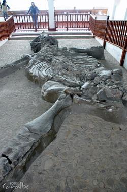 Museo El Fosil, Villa de Leyva (26)-001
