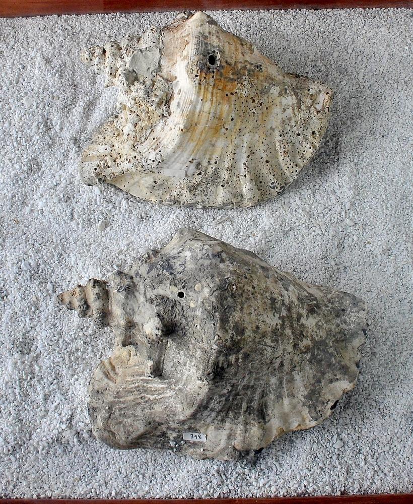 Museo El Fosil, Villa de Leyva (22)-001