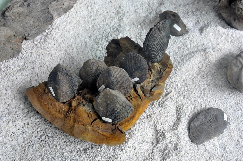Museo El Fosil, Villa de Leyva (19)-001