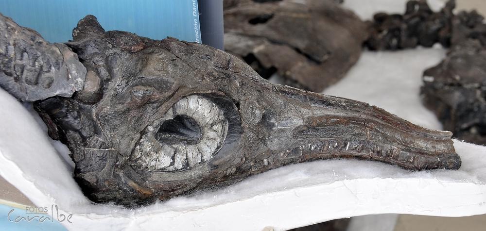 Museo Paleontologico, Villa de Leyva (10