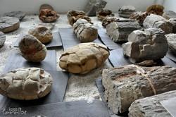 Museo El Fosil, Villa de Leyva (29)-001