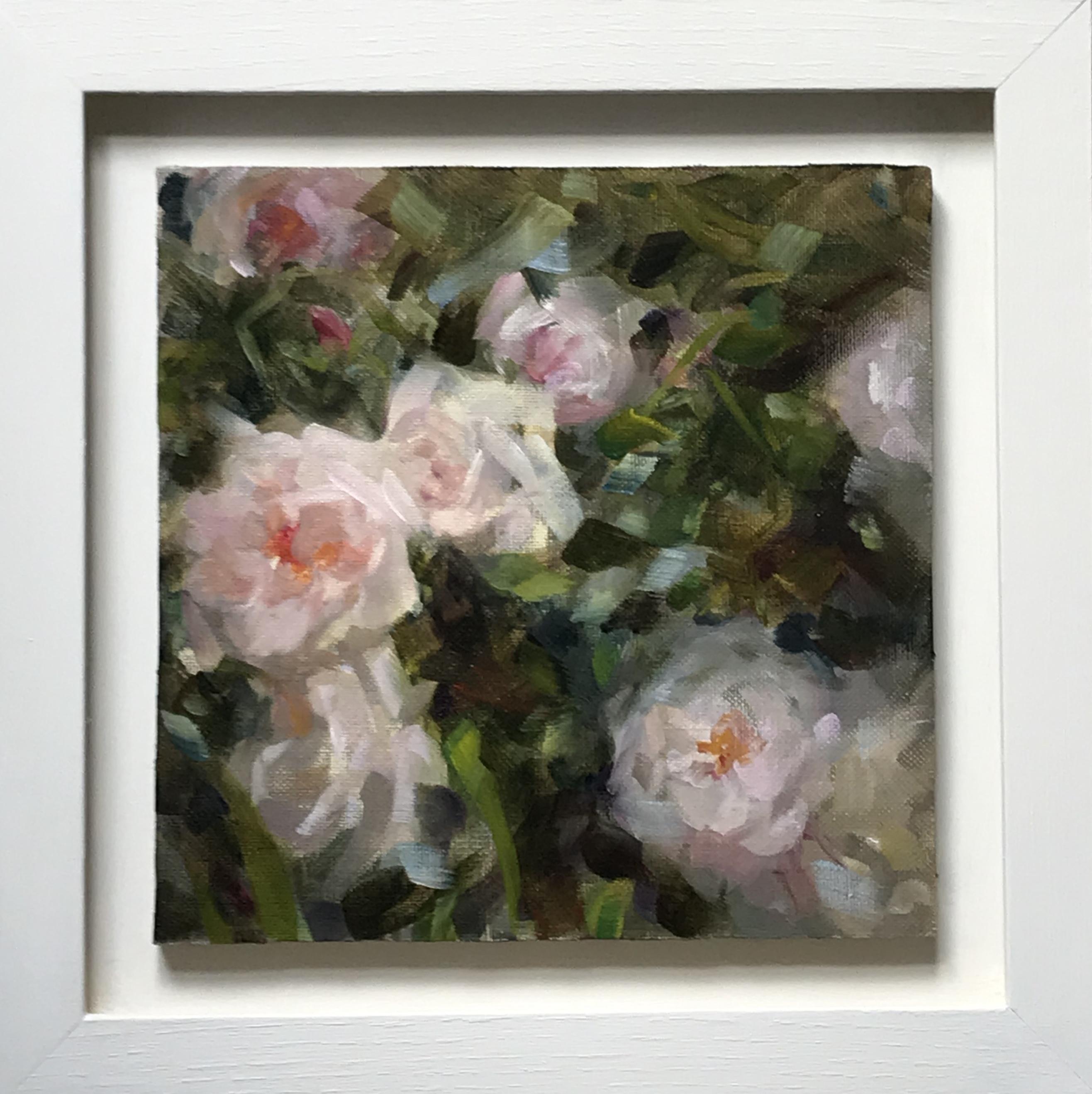 Garden Roses - Series II