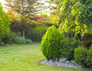 Landscaping, Lawn, and Trees