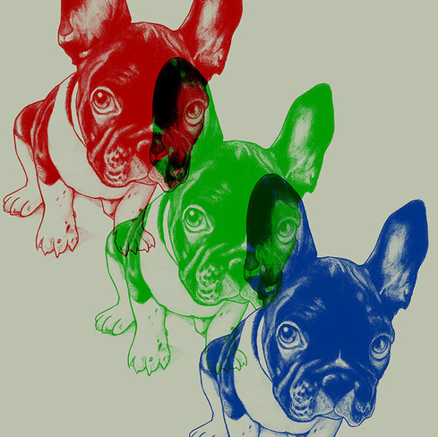 0003 Dog Eyes 3 colors.jpg