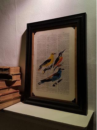 3 Birds Framed Dictionary Print