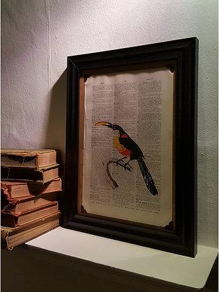 Toucan Framed Dictionary Print