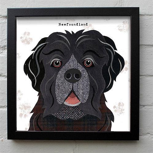 Newfoundland Dog Art Print