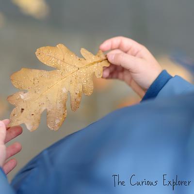The Curious Explorer (7).png